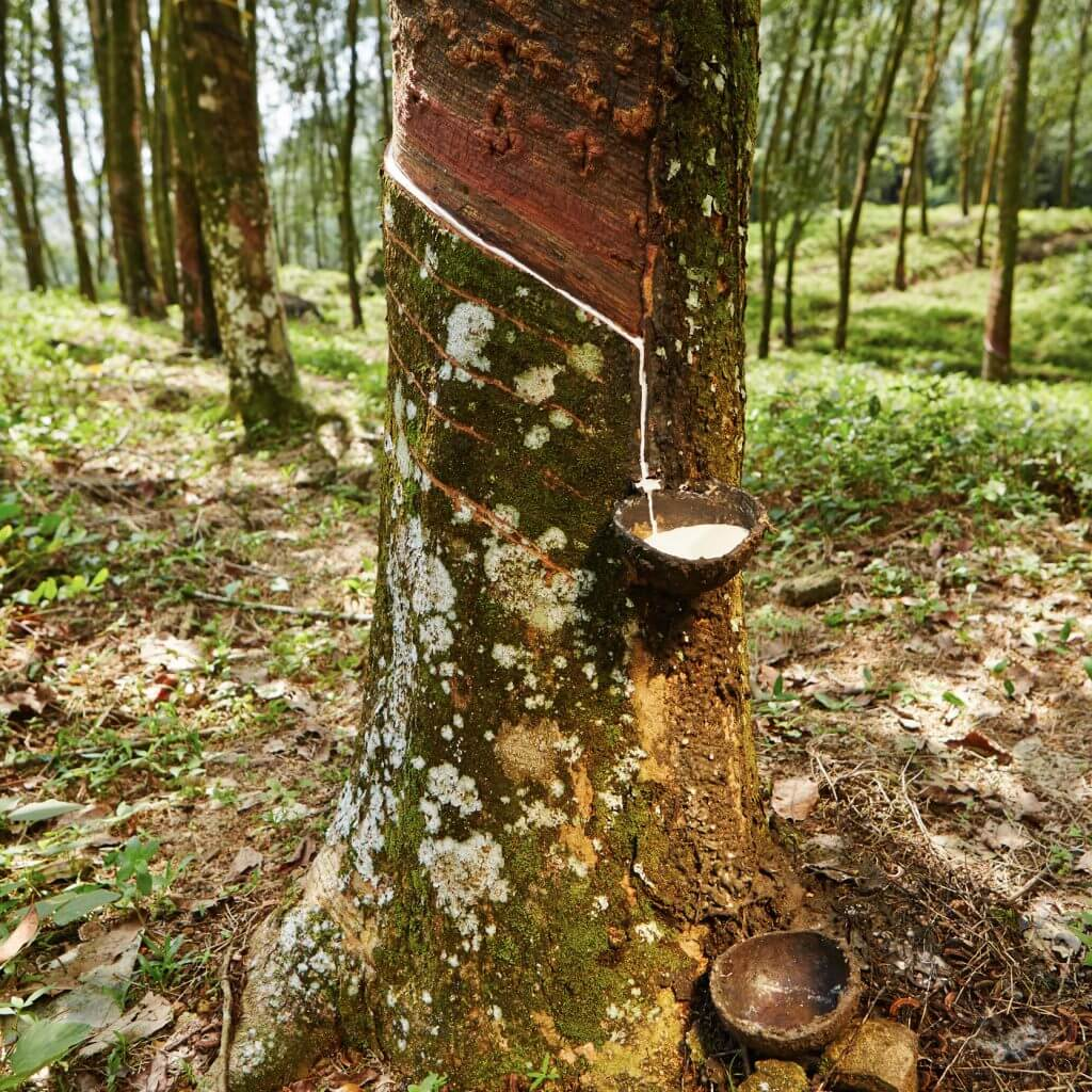 natural milk of the rubber tree