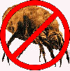 no dustmites